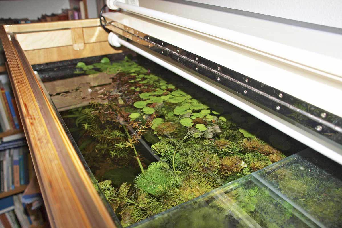 Pin Aquarium Abdeckung Selber Bauen on Pinterest